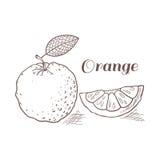 Hand drawn orange with leaf vector illustration Stock Photos