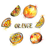 Hand drawn oranges Royalty Free Stock Images