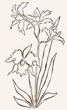 Hand drawn orchid Stock Photography