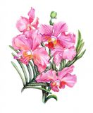 Hand-drawn orchid branch. Beautiful pencilled pink orchid branch Stock Photos