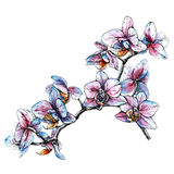 Hand drawn orchid branch. Watercolor style vector illustration Stock Photography