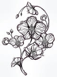Hand drawn orchid flower illustration. Royalty Free Stock Photo