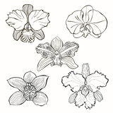 Hand drawn orchid flowers  set . Stock Photo