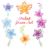 Hand Drawn Orchids Stock Images