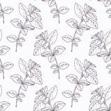 Hand drawn oregano branch outline seamless pattern Stock Photo
