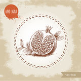 Hand drawn organic half of pomegranate with seeds and leafs. Royalty Free Stock Image