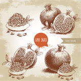 Hand drawn organic pomegranates set. Pomegranates with seeds and leafs. Royalty Free Stock Photography