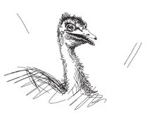 Hand drawn ostrich Stock Images