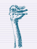 Hand drawn ostrich Stock Photography