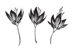 Hand drawn outline flowers sketch silhouette set. Vector black ink drawing isolated on white background. Graphic illustration. Hand drawn outline flowers sketch vector illustration