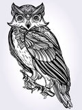 Hand drawn Owl design vintage style. Stock Photo