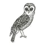 Hand Drawn Owl Stock Photography