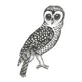 Hand Drawn Owl. Illustration of owl, black and white sketch vector illustration