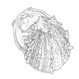Hand drawn oyster with outline and fill. Sea food Royalty Free Stock Images