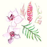 Hand drawn painted pattern. Vector illustration Stock Images