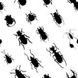 Hand drawn painted seamless pattern of graphic sketch of isolated beetles. On white background Royalty Free Stock Photography