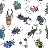 Hand drawn painted seamless pattern of watercolor sketch of isolated beetles. On white background Stock Image