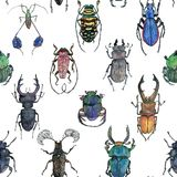 Hand drawn painted seamless pattern of watercolor sketch of isolated beetles. On white background Royalty Free Stock Photos