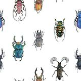 Hand drawn painted seamless pattern of watercolor sketch of isolated beetles. On white background Royalty Free Stock Photo