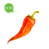 Hand drawn and painted watercolor red hot chilli pepper. Capsicum isolated on white background. Royalty Free Stock Photo