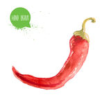 Hand drawn and painted watercolor red hot chilli pepper. Capsicum isolated on white background. Stock Photo