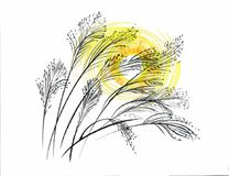 Hand drawn painting with field plants on white background. Hand drawn painting with field plants on white background Royalty Free Stock Image