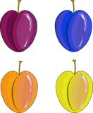 Hand drawn painting purple, orange, yellow, blue plums on white Royalty Free Stock Photography