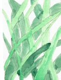 Grasses Watercolor Drawing Royalty Free Stock Images