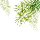 Hand drawn palm tree leaves Stock Image