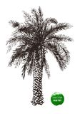 Hand drawn palm tree Stock Photography