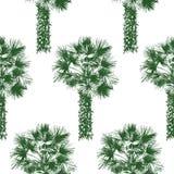 Hand drawn palm tree seamless Stock Photo