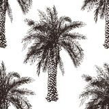 Hand drawn palm tree seamless Stock Images