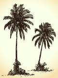 Hand drawn palm tree Royalty Free Stock Photo