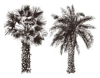 Hand drawn palm trees Royalty Free Stock Photography
