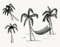 Hand drawn palm trees. Vector Royalty Free Stock Photography