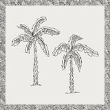 Hand drawn palm trees, vector. Stock Photography