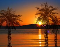 Hand drawn palms at sunset Royalty Free Stock Photography