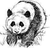 Hand drawn panda Royalty Free Stock Photos
