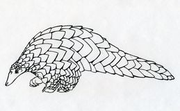 Hand drawn pangolin contour Stock Photo