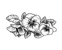 Hand drawn pansy flowers Stock Images