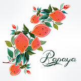 Hand drawn papaya on a branch background . Stock Photography