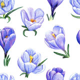 Hand-drawn pattern with crocuses on white. Beautiful penciled pattern with crocuses on white background Royalty Free Stock Photo