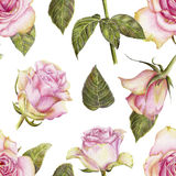 Hand-drawn pattern with pink roses on white. Beautiful pencilled pattern with roses on white background Stock Images