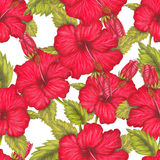 Hand drawn pattern of red hibiscus Stock Photo