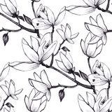Hand drawn pattern seamless magnolia flowers on white background. royalty free illustration