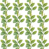 Hand drawn pattern seamless watercolor drawing of plantain with yellow flowers and green leaves isolated on white backdrop. Wildflower for background, texture vector illustration
