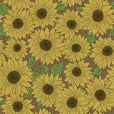 Hand drawn pattern sunflowers background. Flower yellow brown. Packaging products. Hand drawn pattern of sunflowers background. Flower sunflower yellow and brown Royalty Free Stock Image