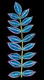 A hand drawn patterned fern. A colourful sketch of a fern leaf on a black background Stock Image