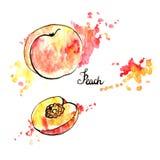 Hand drawn peach Stock Photos