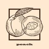 Hand drawn peaches Stock Photos
